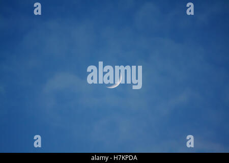 Moon Quarter in the afternoon light. - Stock Photo