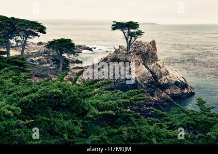 Lone Cypress Tree, 17-Mile Drive, Pebble Beach, Monterey, California, USA - Stock Photo
