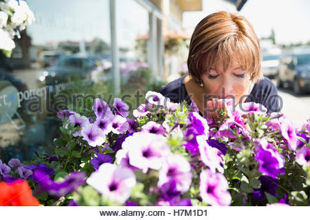 Woman smelling purple petunia flowers at flower shop storefront - Stock Photo