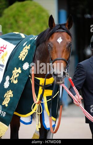 Kyoto, Japan. 23rd Oct, 2016. Satono Diamond Horse Racing : Satono Diamond after winning the Kikuka Sho (Japanese - Stock Photo