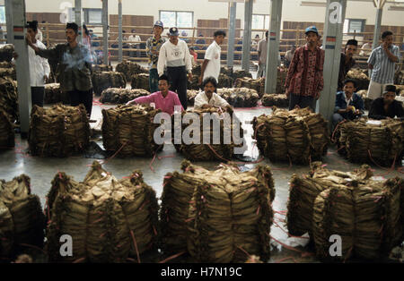 Indonesia Java Jember, tobacco auction, farmer sell dried  tobacco leaves which are used for cigars - Stock Photo