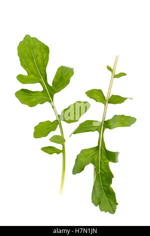 fresh arugula leaves on white background - Stock Photo