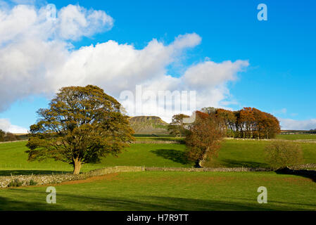 Pen-y-ghent, one of Yorkshire's Three Peaks, Yorkshire Dales National Park, North Yorkshire, England UK - Stock Photo