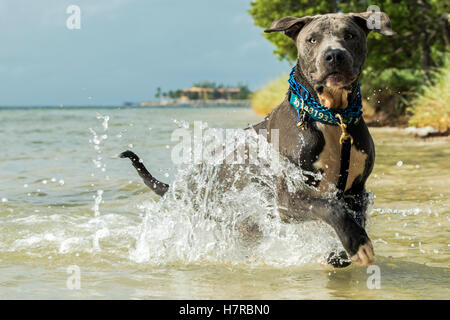 Coco Plum Beach Dog Friendly