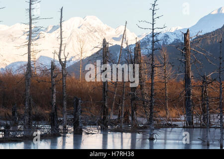 Snow covered mountains in South-central Alaska, near Turnagain Pass area, dead trees killed by an earthquake shown - Stock Photo