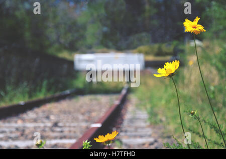 Flowers and weeds at the end of an abandoned old railway line. Selective focus,. - Stock Photo
