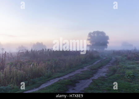 Morning haze.The path dawn morning haze outdoors in the forest, view of foggy sunrise in early autumn. - Stock Photo