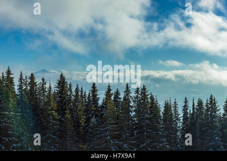 Mountain trees. Scenic view of the mountain forest against blue cloudy sky. - Stock Photo