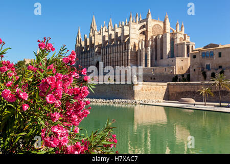 The Cathedral of Santa Maria of Palma, also La Seu is a Gothic Roman Catholic cathedral located in Palma, Mallorca, - Stock Photo