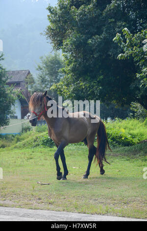 Soft focused of horse is walking on the grass with nature background - Stock Photo