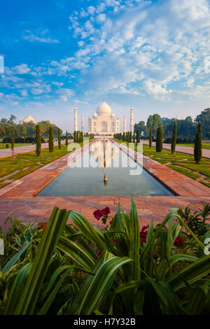 Plant foreground at empty Taj Mahal reflected in front lawn garden water fountain in Agra, India on a clear blue - Stock Photo