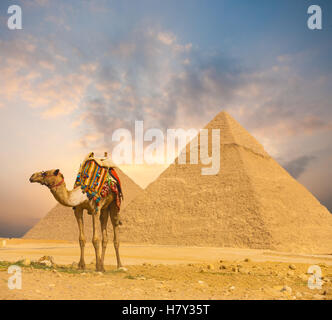 Wide sky sunset behind Egyptian Pyramids Khafre and colorfully outfitted standing camel at evening in Giza, Cairo, - Stock Photo