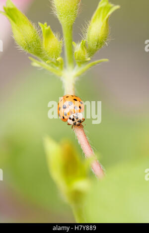 ladybug on flower - Stock Photo