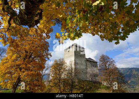 Kaprun: Kaprun Castle, maple trees, Pinzgau, Salzburg, Austria - Stock Photo