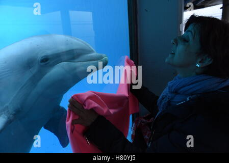 Madrid, Spain. 08th Nov, 2016. A specimen of Common bottlenose dolphin looks curiosly a blanket at Madrid Zoo. Credit: - Stock Photo