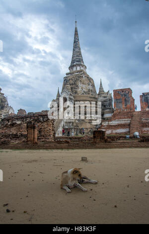 Dog sitting outside Ayutthaya temple on a cloudy day - Stock Photo