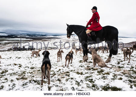 Hawick, Scottish Borders, UK. 9th November 2016. Huntsman Tim Allen of The Duke of Buccleuch Hunt during their opening - Stock Photo