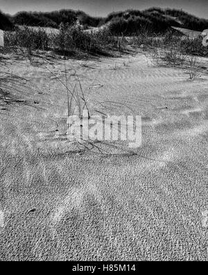 Am Strand, Langeoog. Deutschland Germany.  A close-up view of the detail on a wind swept beach.  A few isolated - Stock Photo