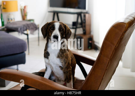 Lovely dog left alone ready for messing up home - Stock Photo