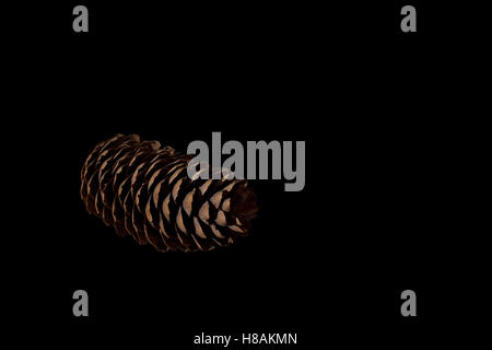 Pine cone on black background - Stock Photo