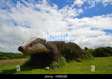 Giant willow badger at the Welsh Wildlife Centre, Cardigan, Ceredigion - Stock Photo