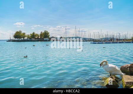 Port of Balatonfured and Lake Balaton with boats and birds in Hungary - Stock Photo