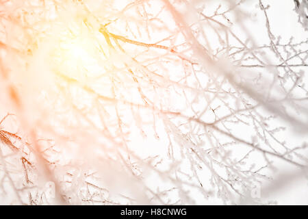 Image of sun shining through snow covered branches. - Stock Photo