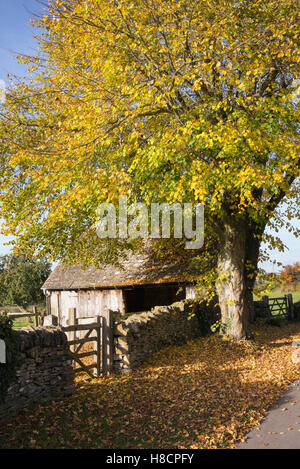 Barn and lime tree in autumn. Adlestrop. Cotswolds, Gloucestershire, England - Stock Photo