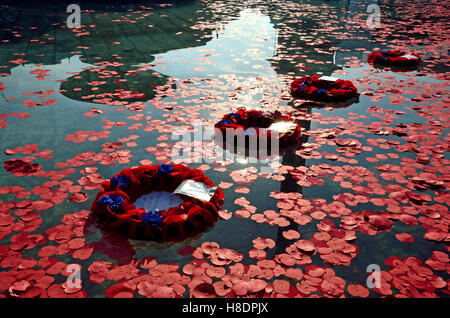 London, UK. 11th November, 2016. Poppies laid to commemorated Armistice Day - wreaths floating in the fountains, - Stock Photo