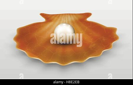 Vector pearl in shell - Stock Photo