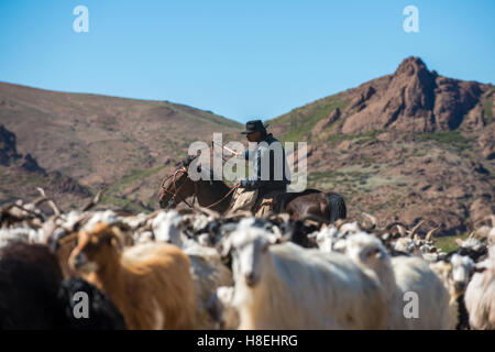Gaucho on horseback herding goats along Route 40, Argentina, South America - Stock Photo