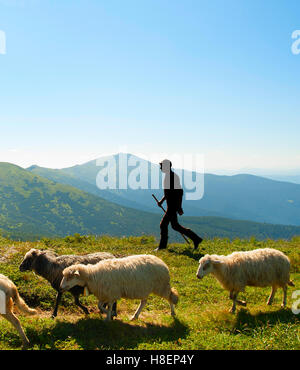 Silhouette of a shepherd with herd of sheep on top of mountains - Stock Photo