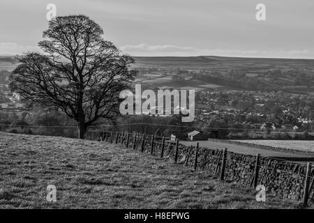 A lone tree in a field on the moors above Menston, Leeds, West Yorkshire, taken in November 2016 - Stock Photo