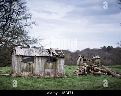an old derelict fallen down shed and pile of logs in the countryside - Stock Photo
