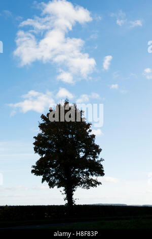 Silhouette tree against a blue cloudy sky. UK - Stock Photo