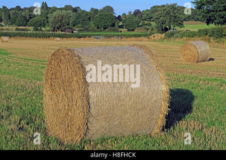 Late summer hay bales in a field, Moore, Warrington, Cheshire, England, UK - Stock Photo