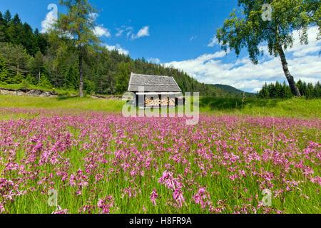 splendid meadow of pinks in front of wooden hut - Stock Photo