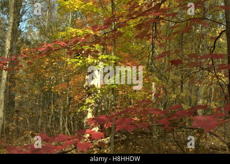 Fall Colors in Osceola County, Michigan Stock Photo
