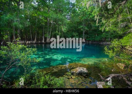 MANATEE SPRINGS STATE PARK, Suwanee river, Florida, USA - Stock Photo