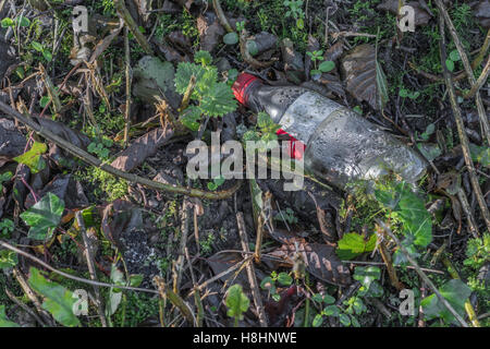 Discarded soft drink bottle seen in a country hedgerow. Plastic waste, war on plastic concept. Metaphor environmental - Stock Photo