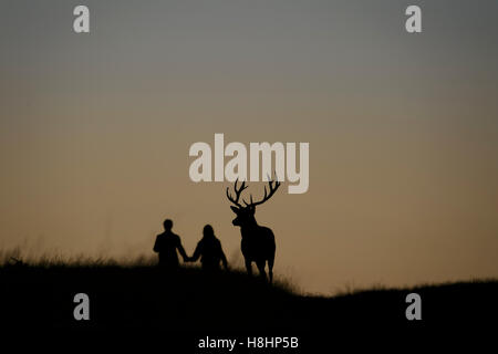 Boy and girl walking hand in hand next to the silhouette of a red deer stag against a red sunset sky. Richmond Park, - Stock Photo