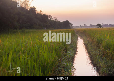 Stream running through rice fields in Chitwan, Nepal seen at dusk - Stock Photo