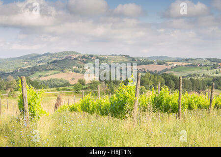 Vineyards near to Montefalco in the Val di Spoleto, Umbria. It is known for its red wine of Sagrantino. - Stock Photo