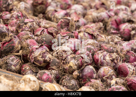Amsterdam, Netherlands close up of different flower bulbs for sale in an outdoor market. - Stock Photo