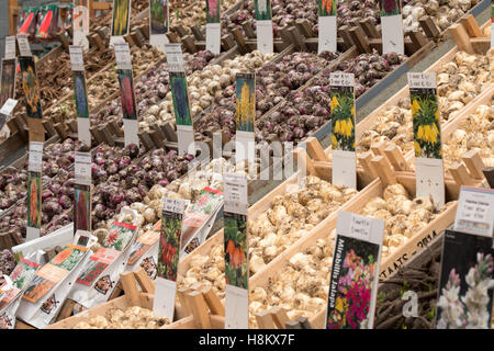 Amsterdam, Netherlands large array of different flower bulbs for sale in an outdoor market. - Stock Photo