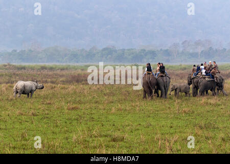 Asian Elephant (Elephas maximus). Tourists watching an Indian Rhinoceros while riding on an elephant. Kaziranga - Stock Photo