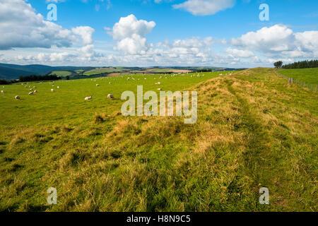 Offa's Dyke on the English/Welsh border near Knighton, Powys, Wales, UK - Stock Photo