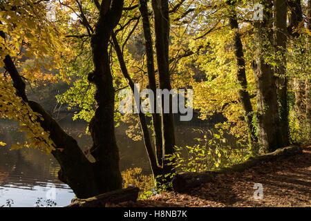 Trees over hanging lake by gentle walk. - Stock Photo