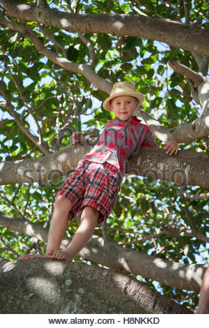 Boy (6-7) standing on tree branch - Stock Photo