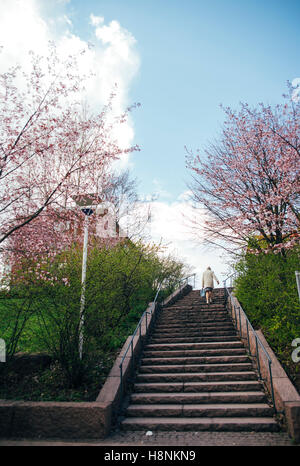 Staircase between cherry trees in bloom, Finland, Helsinki - Stock Photo